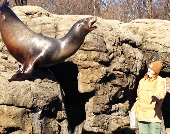 Sea Lion, mackerel, Prospect Park Zoo, weekend