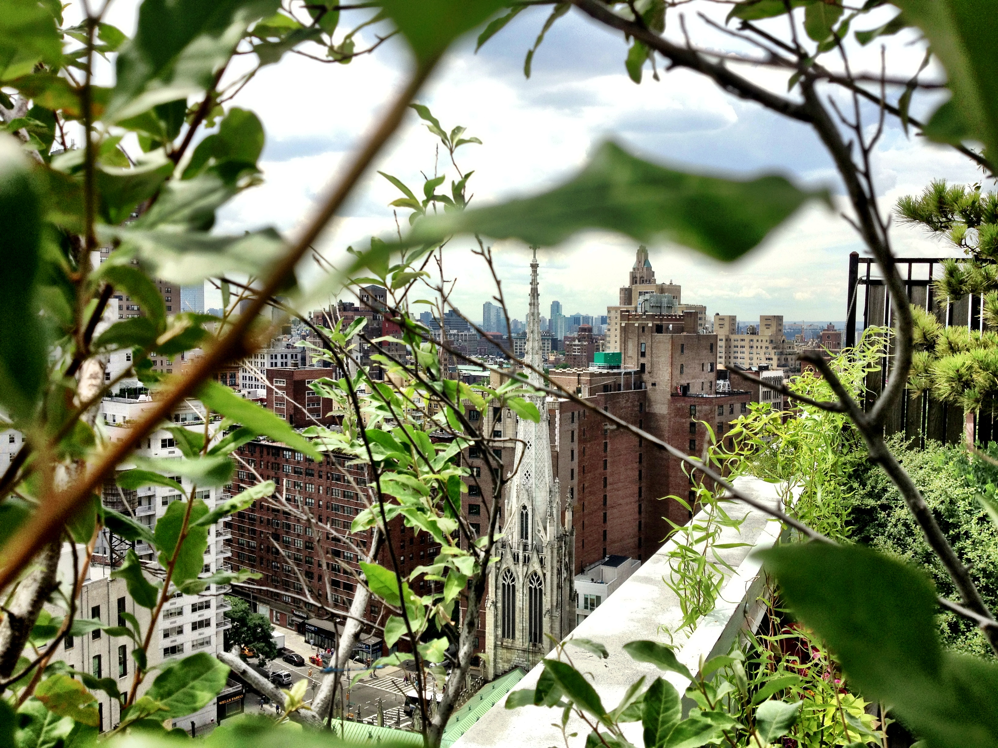 roof garden, new york city, greenwich village, nyc