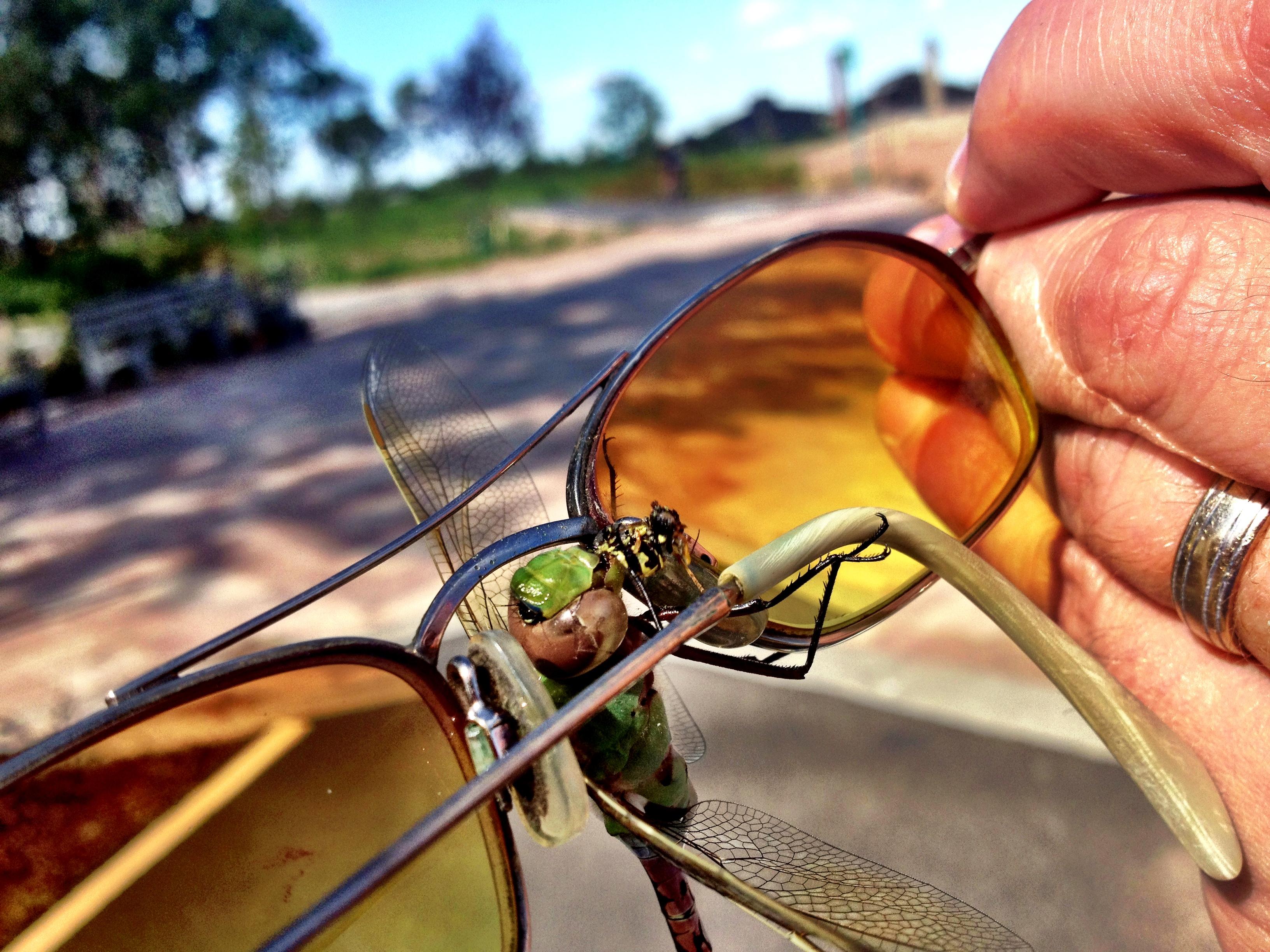 staten_island_dragonfly